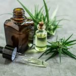 cannabis therapeutique cbd